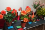 Downend Flower Show displays